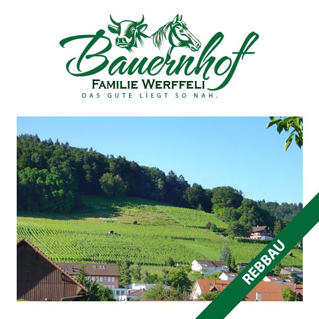 bauernhof-familie-werffeli-rebbau