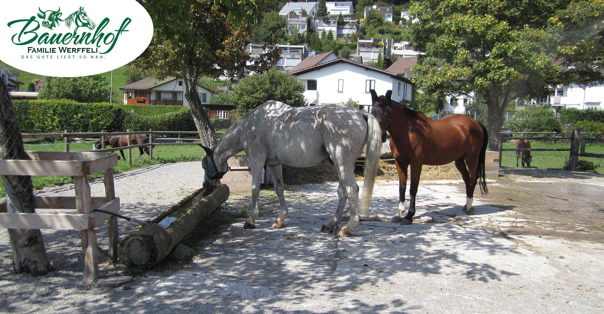 bauernhof-familie-werffeli-slide05